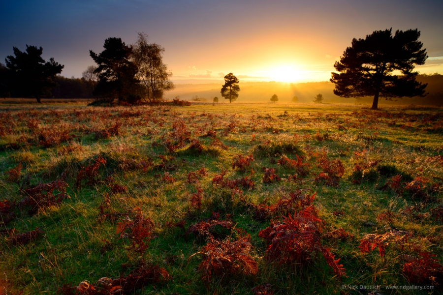 Autumn in Ashdown Forest