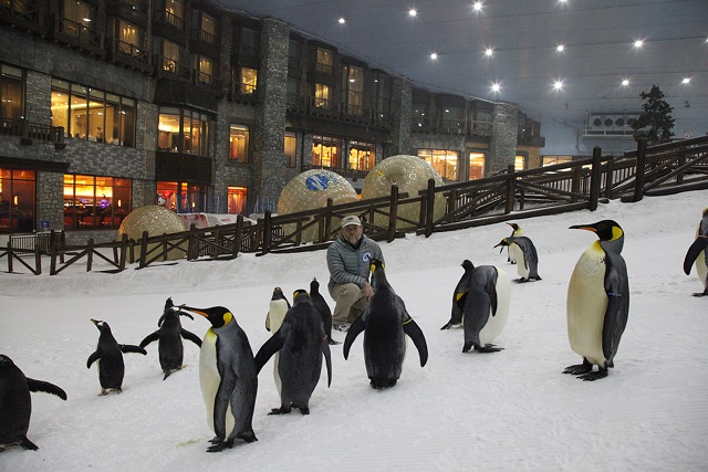 Ski dubai penguins