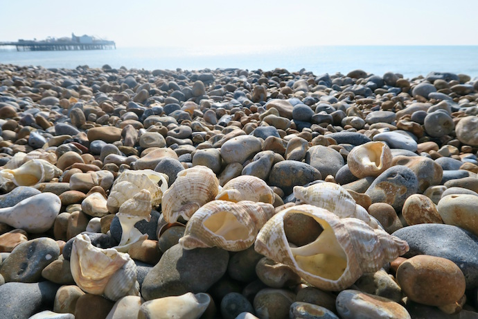 Brighton seashells on the beach